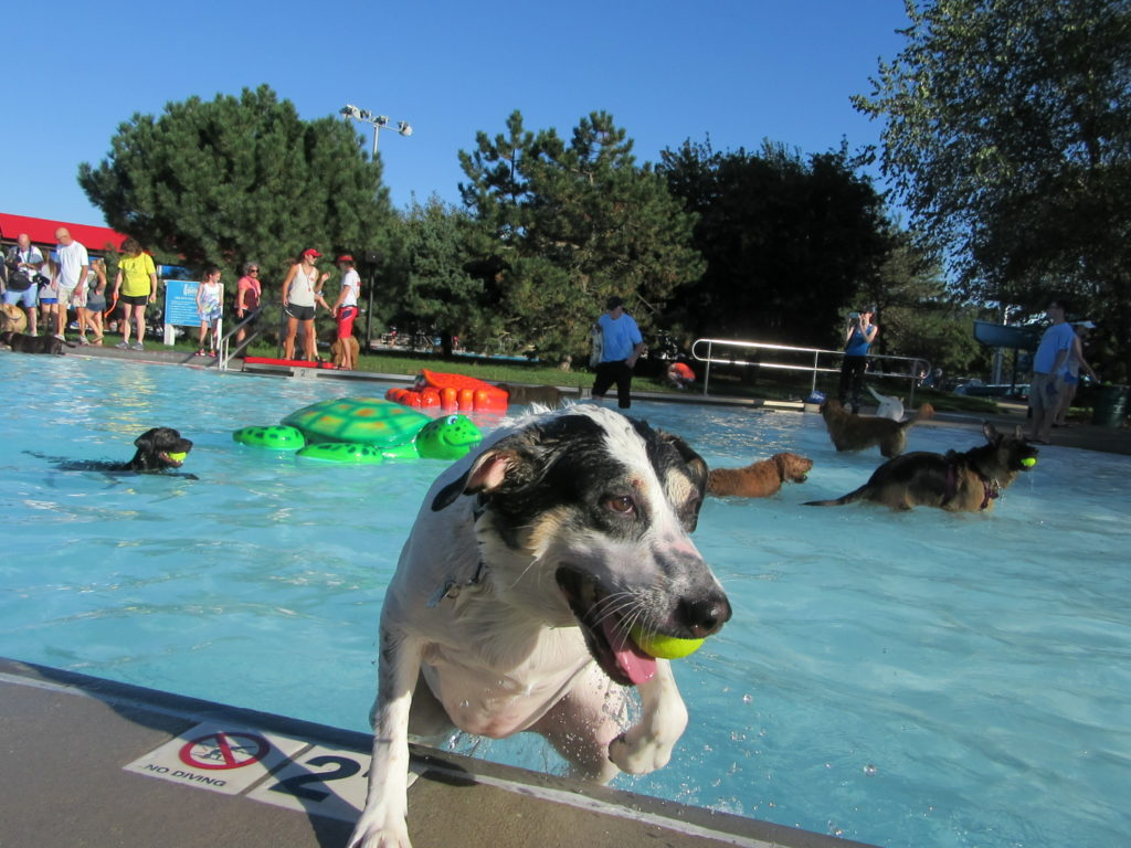 dog-exiting-pool-singe